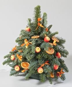 Оранжевая ель